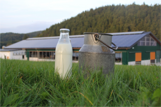 Kuhle Milchbar