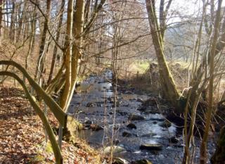 Wald–Wasser–Wiese - Erlebnispfad  in Wiemeringhausen
